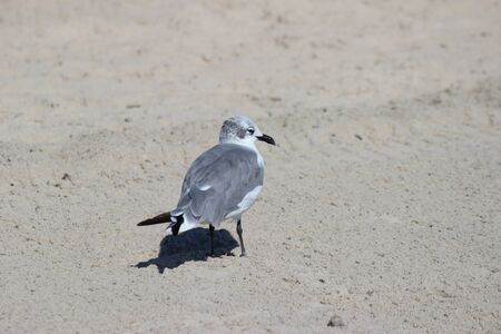 seagull at the beach Banco de Imagens