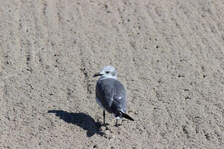 Seagull in the sand