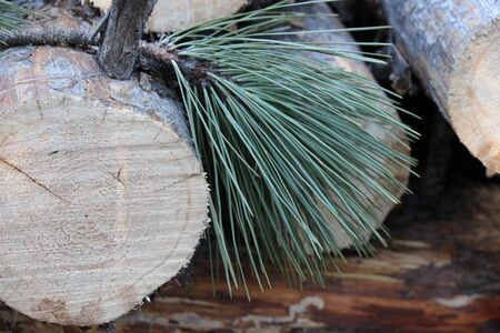 logs: logs