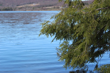 Blue Lake with Evergreens