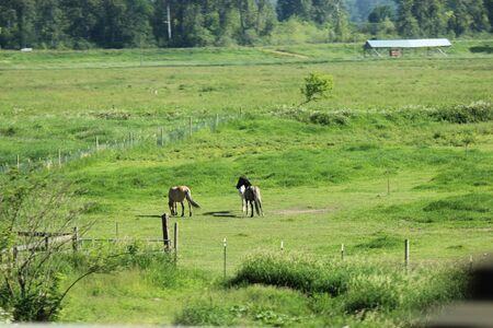 Horses grazing Banco de Imagens