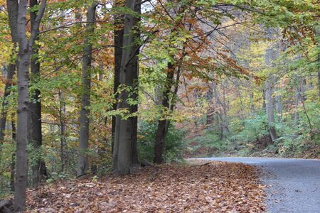 fall time back road
