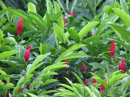 green bush with red flowers Banco de Imagens