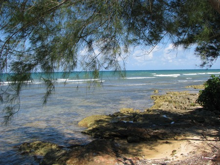 tree by the rocky beach