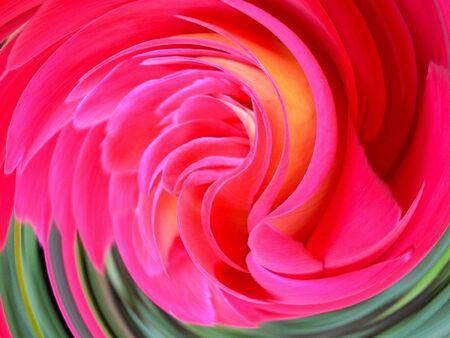 Pink rose rotation