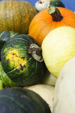 Close-up image of a variety of organic heirloom winter squashes, including pumpkin, in a blue wheelbarrow    photo