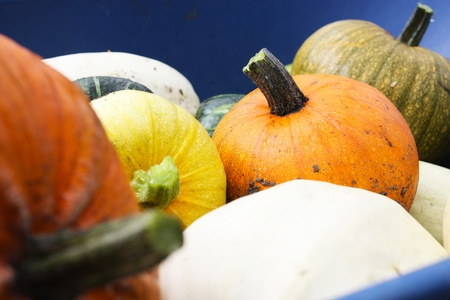 Close-up image of a variety of organic heirloom winter squashes, including pumpkins, in a blue wheelbarrow