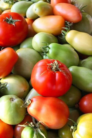 Tomatoes Ripening Stock Photo