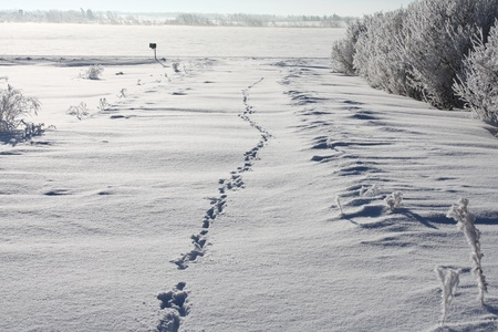 Animal tracks in deep snow along a rural lane on a sunny day  Stock Photo