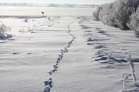 animal tracks: Animale tracce nella neve profonda, lungo una corsia rurale in una giornata di sole
