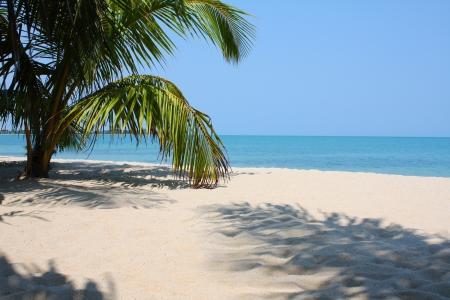 A palm tree on a white sand beach with a calm ocean and clear blue sky. Reklamní fotografie