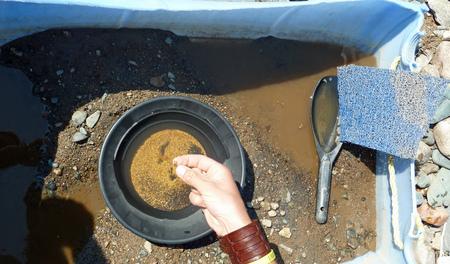 prospector: Mano masculina tocando piezas de oro fresco encontradas en una bandeja de oro
