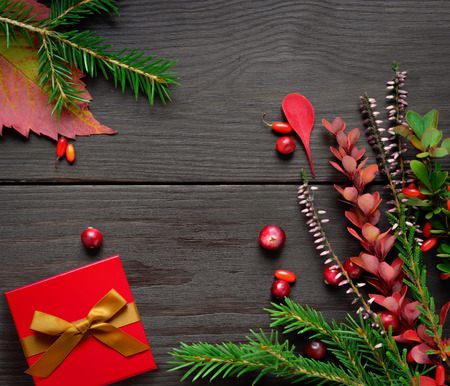 firtree: Christmas background with firtree heather and berryes on dark wooden background. Present in red box. Stock Photo