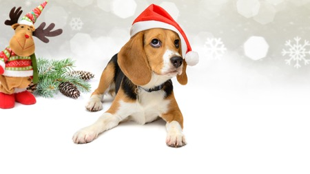 Dog in santa hat with New Year and christmas decorations background