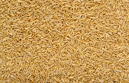 Ripe oat grains texture for background in high resolution