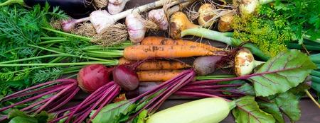 Récolte de légumes biologiques frais