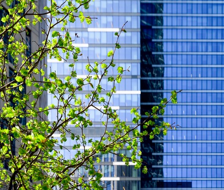 Spring green tree on modern Office building background.