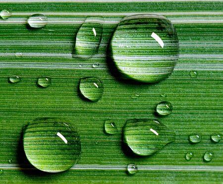 Close-up Large beautiful raindrops on a leaf