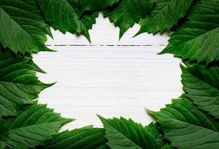 Green leaf frame on white wooden background. Copy space Banco de Imagens