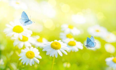 Flying butterflies on daisy flowers field Banco de Imagens