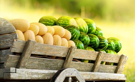 Pile of ripe watermelons and yellow melons