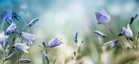 Fluttering butterfly over lilac bellflowers background Banco de Imagens - 127616835