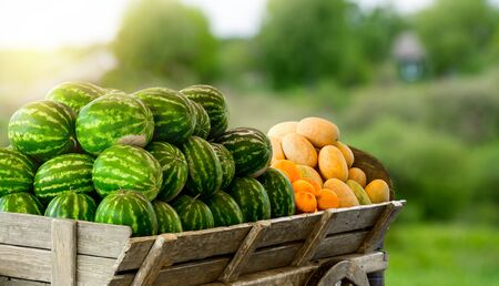 Pile of ripe watermelons and yellow melons in the cart