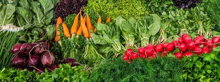 Harvest of Fresh organic vegetables for banner or background Banco de Imagens