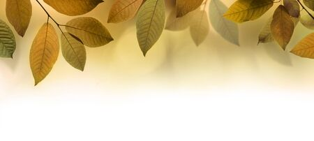 Autumn leaves border background or banner 版權商用圖片