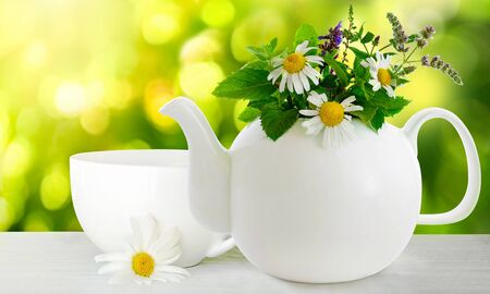 White teapot with chamomile, mint flowers and other herbs on green nature blurred background Banco de Imagens