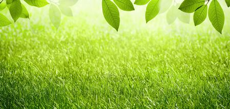 Natural spring summer green scenic background with frame of grass field and leaves in nature.