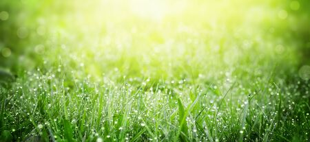 Green grass on meadow field with dew droplets in morning light Zdjęcie Seryjne