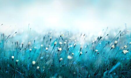 Misty morning in the meadow. 版權商用圖片