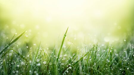 Green grass on meadow field with water drops background.