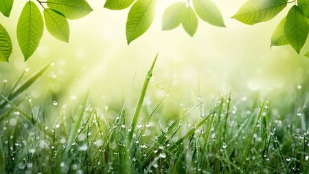 Spring summer green nature background with frame of grass with dew and leaves.