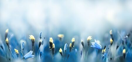 Spring morning in the meadow nature background Reklamní fotografie