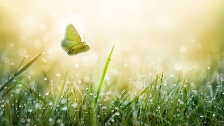 Green grass on meadow field with water drops and butterfly summer background.