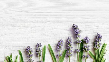 Lavender flowers on white wooden background Фото со стока