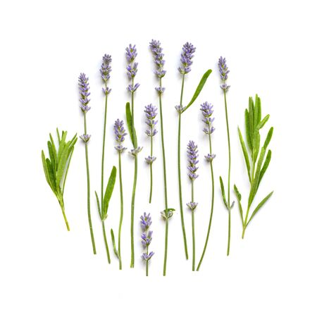Lavender flowers floral ornament on a white
