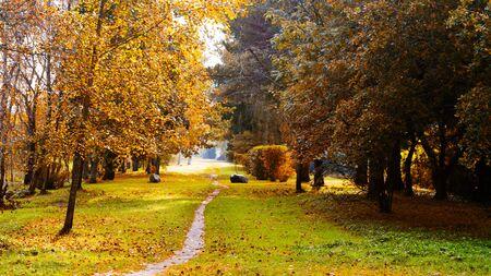 Autumn park landscape 版權商用圖片 - 130004989