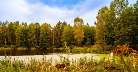 Forest overgrown lake in autumn