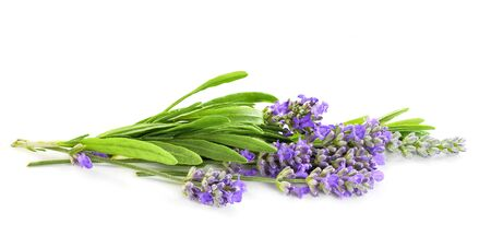 Lavender flowers bunch isolated on white