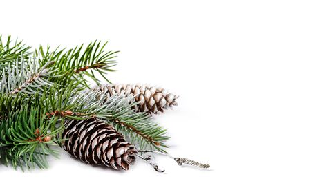 Fir branch and pine cones on a white background.