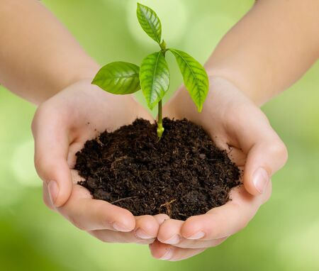 Hands holding young green plant on blurred green background. Save Earth concept.