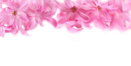 Spring pink flowers border or banner background. Shallow dof. Soft focus
