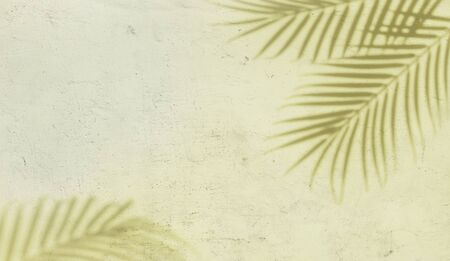 Palm leaf shadows on a white concrete textured wall abstract background. Copy space