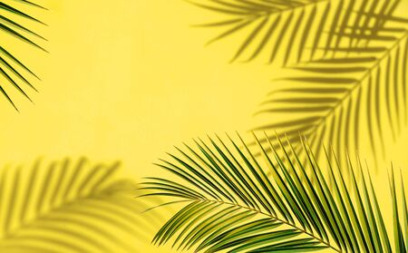 Palm leaf and shadows on yellow background. Imagens