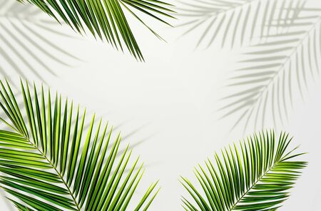 Palm leaf and shadows tropical frame border, background. Copy space. Summer exotic concept.