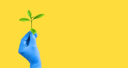 Hand in blue medical glove holding a green plant on yellow background. Copy space