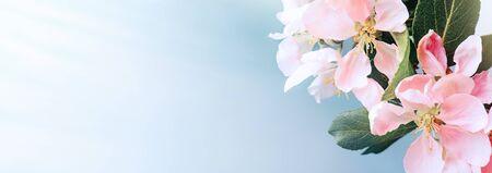 Spring apple blossoms on blue bokeh background. Spring border, web banner. Imagens
